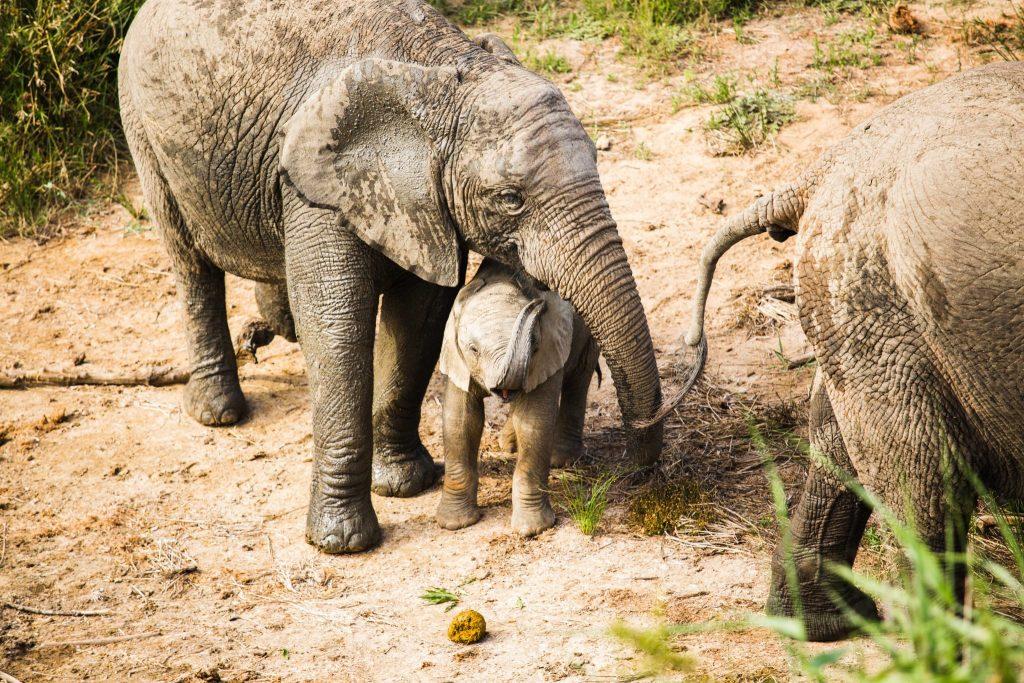 Amakhala Game Reserve Zuid-Afrika safari