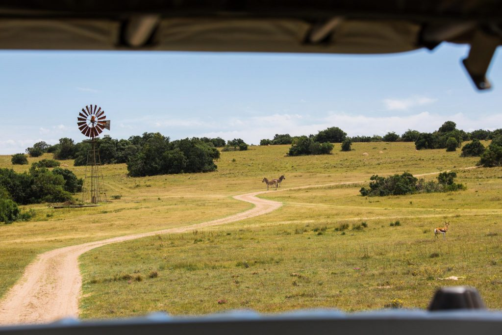 Glamping Zuid Afrika bij Schotia Safari