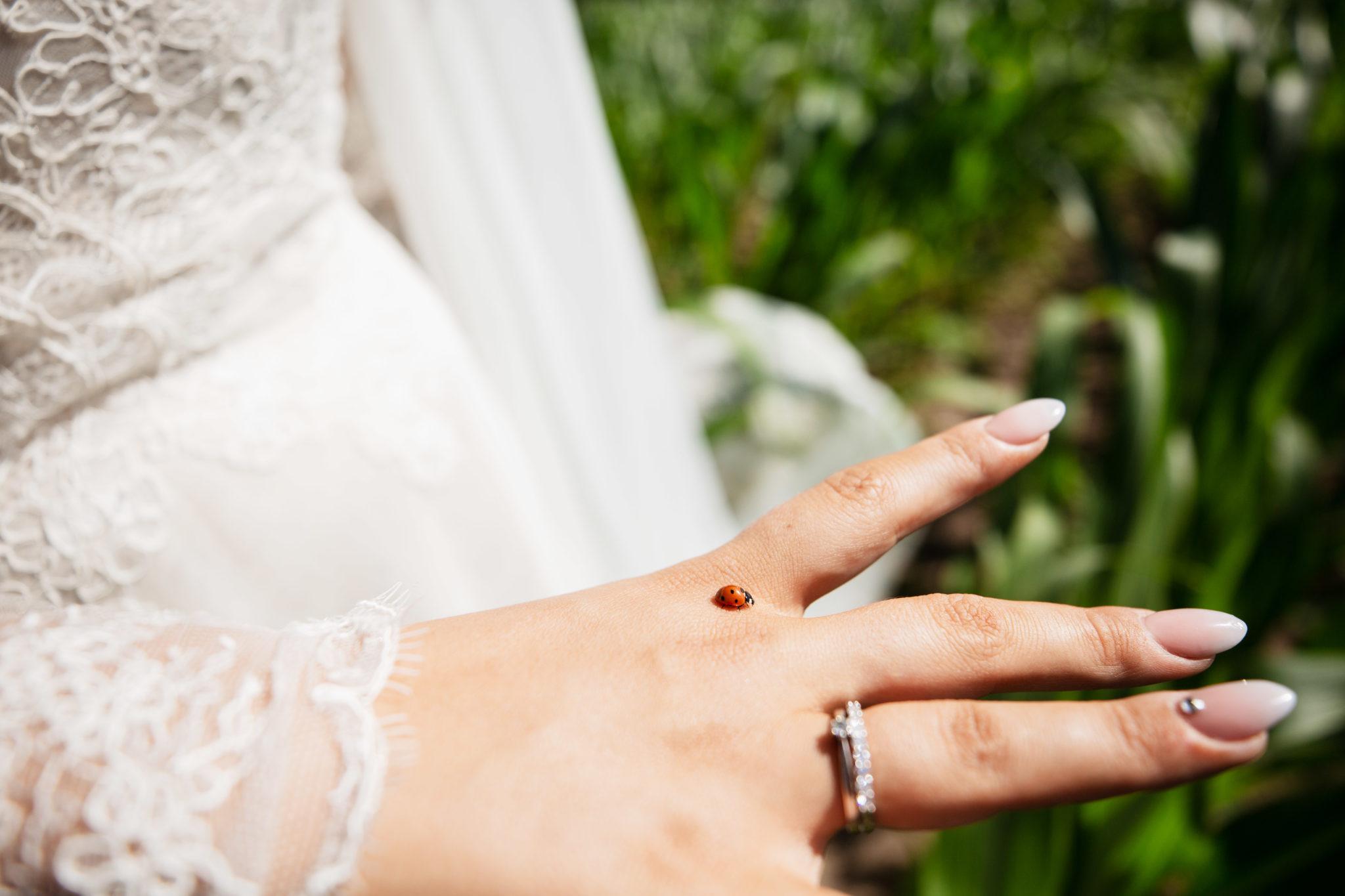 Bruiloft lieveheersbeestje op de ring