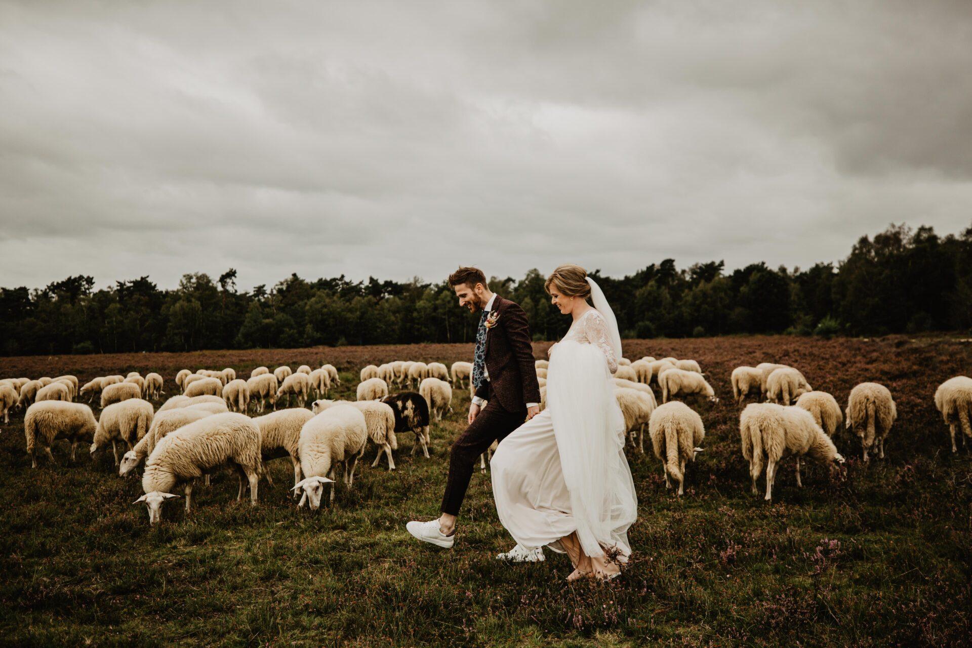 Bruidsreportage kudde schapen ermelo